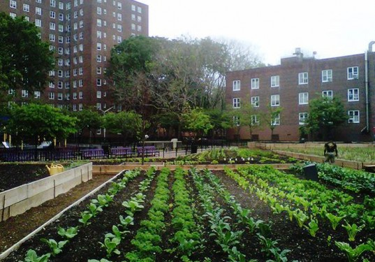 Green City Force, Added Value Farm, Nefratia Coleman, Red Hook Houses, Building Healthy Community initiative, Urban Farm Corp, NYCHA farms, John Ameroso,
