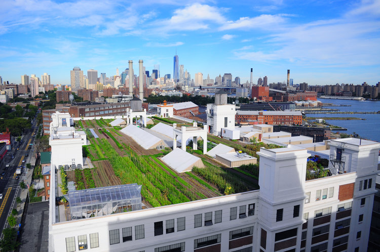 Brooklyn Grange, Brooklyn Navy Yard, BK Reader, urban farming, rooftop farms, sustainability, local farm, bee-farming, local honey, landscaping, landscape consulting, City Growers, healthy eating, Green Infrastructure Stormwater Management Initiative, farm to table, roof to table, local business, Brooklyn business, Brooklyn innovation,